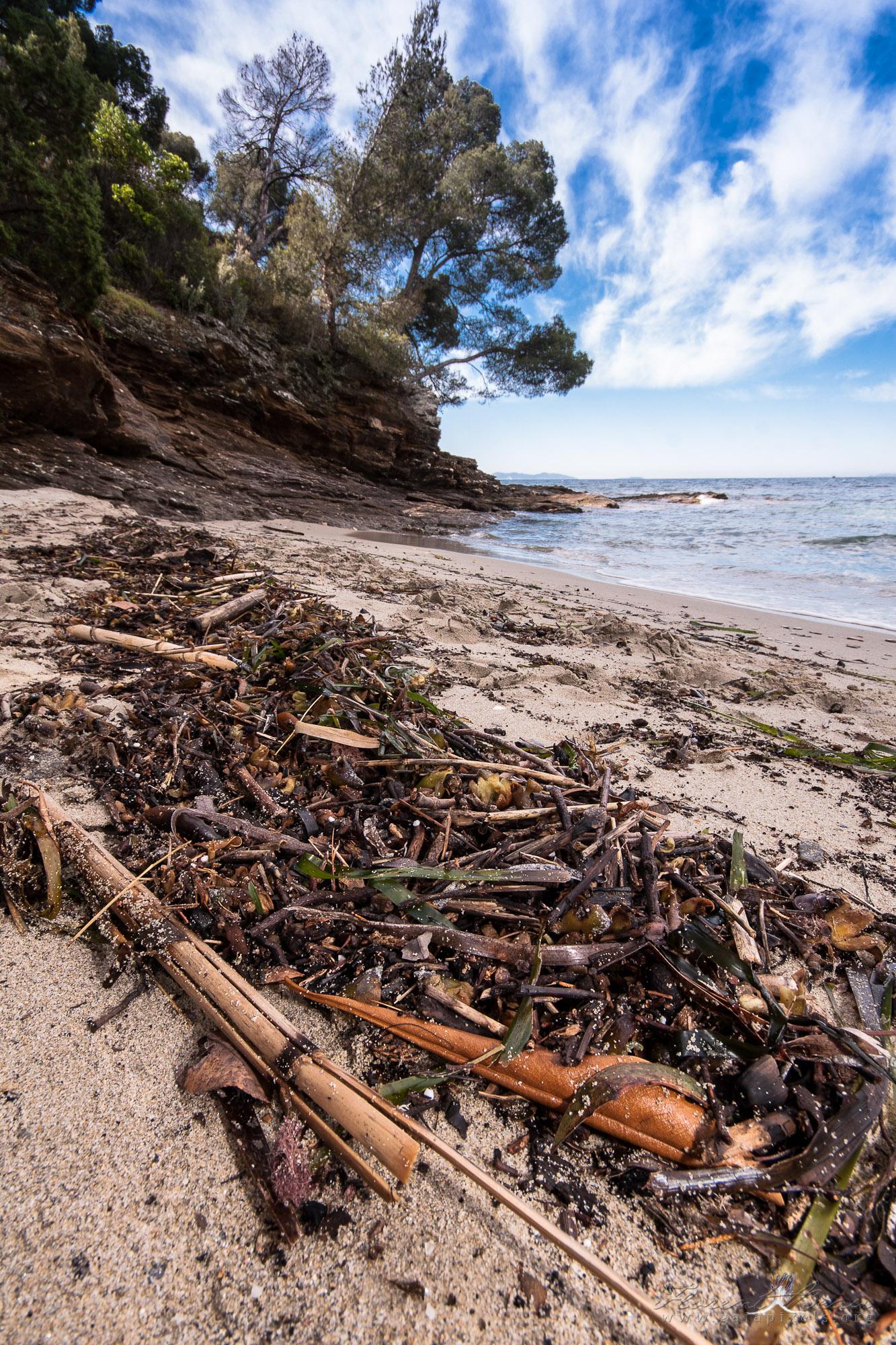 Laisse de mer sur le plage du figuier, Rayol-Canadel-sur-Mer
