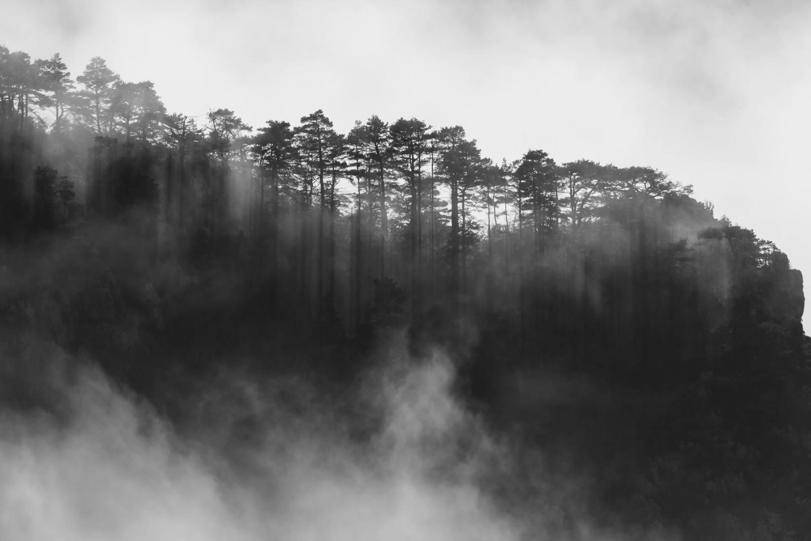 Lever de brume sur la forêt du Verdon (Rougon, Alpes de Haute-Provence)