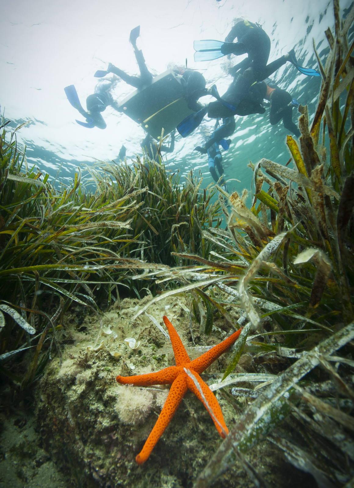 Balades aquatiques à la découverte de la vie marine (Cavalaire-sur-Mer, Var)