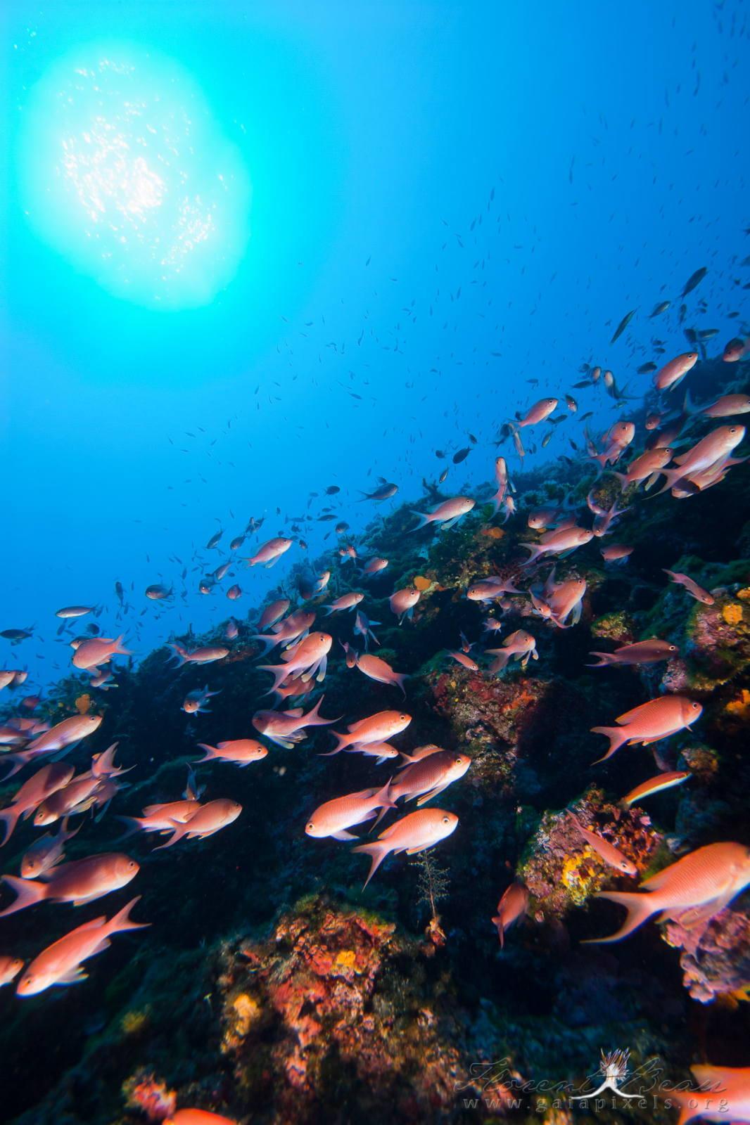 Fonds coralligènes (Marseille, Bouches-du-Rhône)